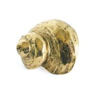 Emenee OR424 Turban Conch Cabinet Knob in Antique Bright Gold (ABG)