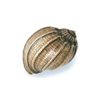 Emenee OR428 Bonnet Conch Cabinet Knob in Antique Matte Copper (ACO)
