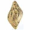 Emenee OR106 Traditional Seashell Cabinet Knob shown in Antique Matte Gold (AMG)